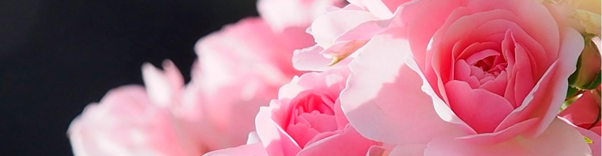 Les Journées de la Rose sont également l'occasion d'une promenade dans le vaste domaine de Chaalis...
